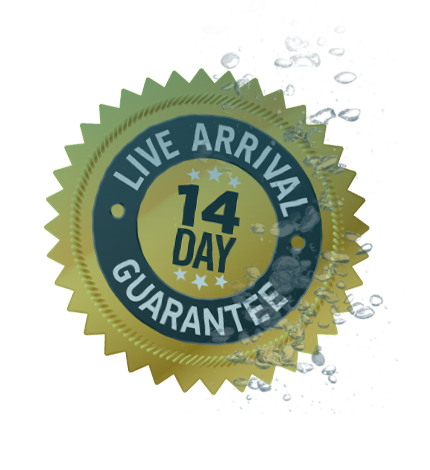 14_day_badge