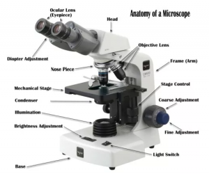 A compound microscope with the parts labeled