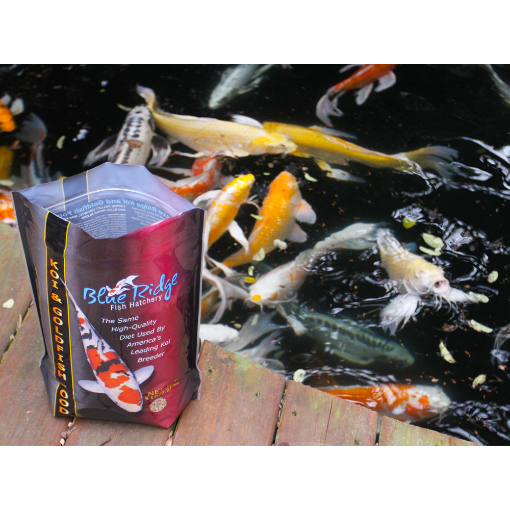 Growth formula koi goldfish food large pellet koi for Koi fish food for sale