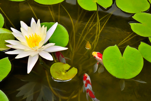9 ways to keep your pond plants safe from your koi next for Pond friendly plants
