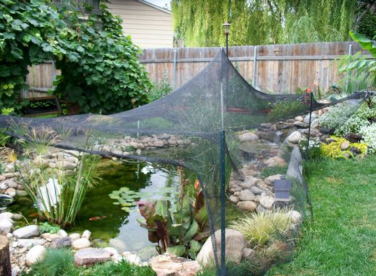 Your koi fish pond fall preparation checklist next day koi for Fish pond preparation