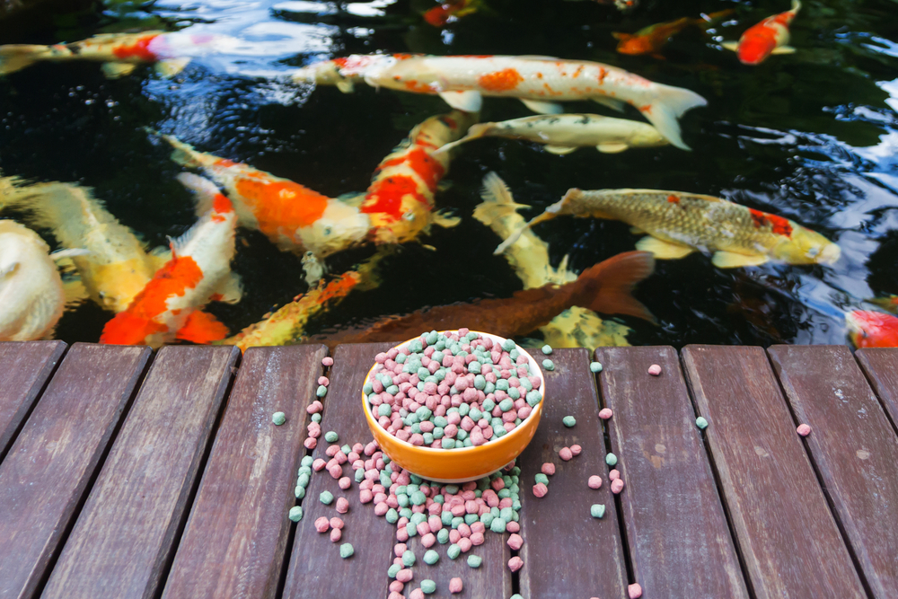 Koi food for thought next day koi for Fish food for pond fish
