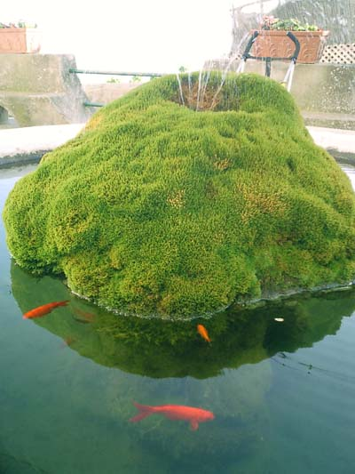 The importance of a pre filter in a koi pond next day koi for Koi fish habitat