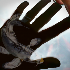 Koi in a shadow of the hand about to be inspected